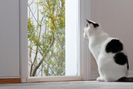 ネコと快適に過ごす住まいづくりのコツ1:大阪でマンションリフォーム・リノベーションの設計